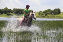 Splashing horses